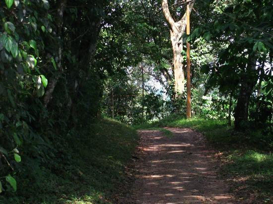 Verdure Wayanad: the path