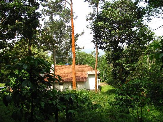 Verdure Wayanad: the view from the bungalow