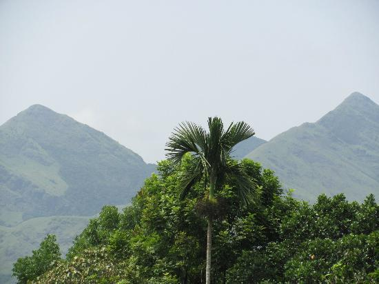 Verdure Wayanad: most catchy view:)