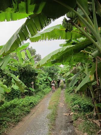 Grasshopper Adventures: Biking tru banana plantation