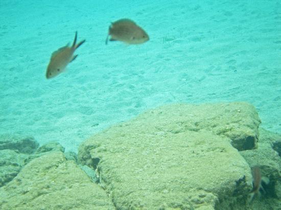 Elounda Island Villas: snorkeling