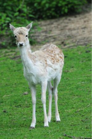 Maryon Wilson Animal Park