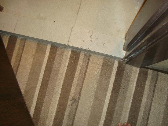 Celyn City Hotel: Very dirty carpet and stain