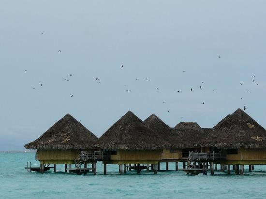 Sofitel Bora Bora Marara Beach Resort: The Hotel