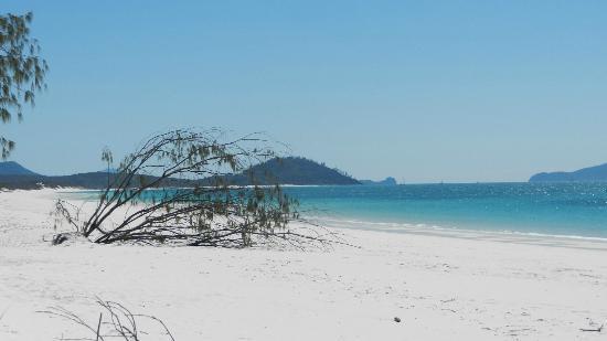 Whitehaven Beach: Picture perfect