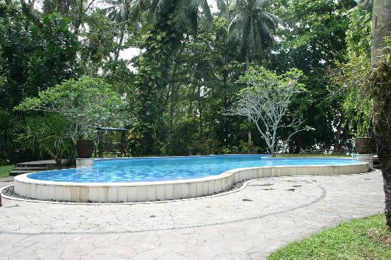 Murex Dive Resort: anytime to use: swimming pool