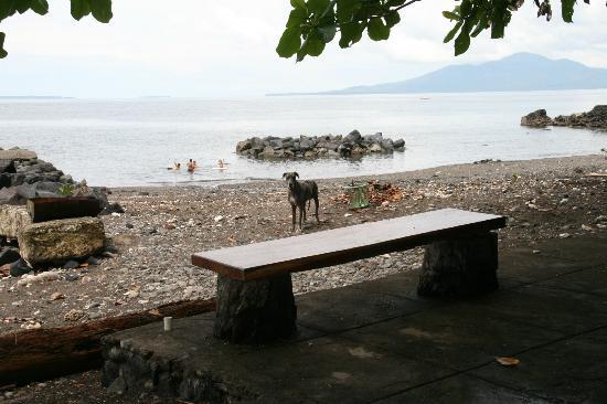 Murex Dive Resort: black and stony beach