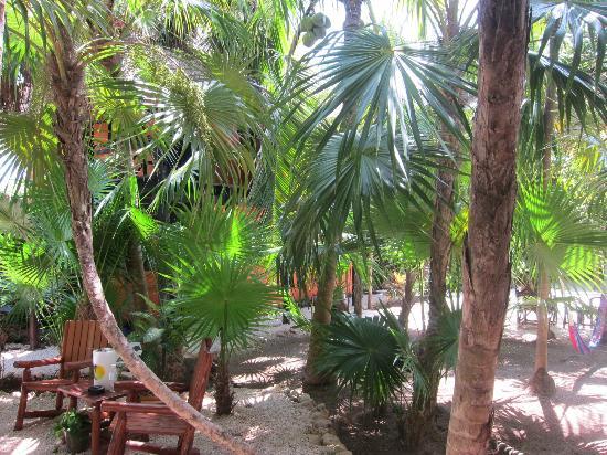 Las Palmas Maya: Lush vegetation