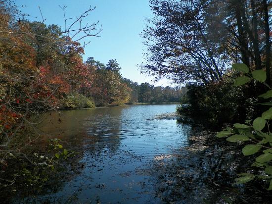 Pioneer log cabin picture of callaway gardens pine for Callaway gardens fishing