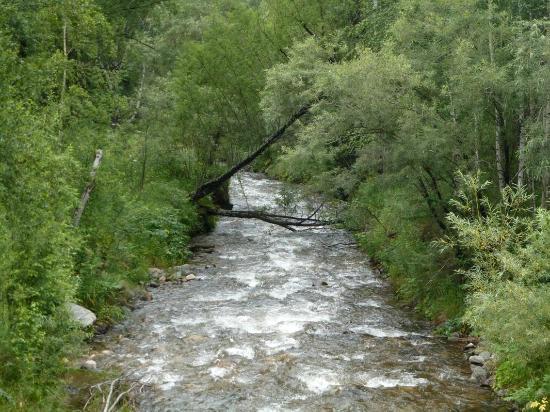Altay Hotel : Typischer Naturwald 25 km östlich von Ridder