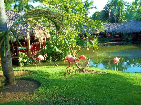 Natura Park Beach Eco Resort Spa Flamingos By Media Luna Restaurant