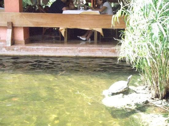 Iberostar Tucan Hotel: Turtles