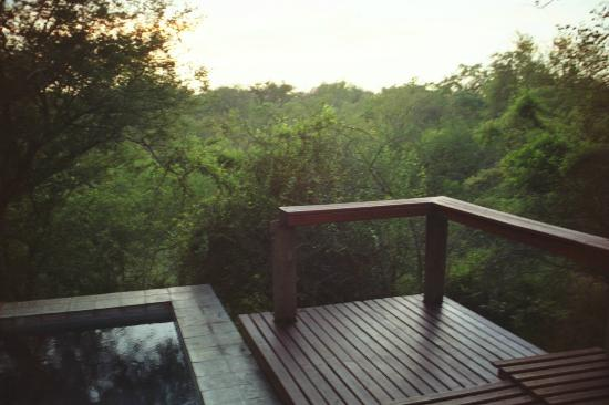 Thornybush Game Lodge: View from our deck with plunge pool