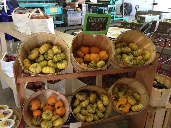 Jackson's Orchard : Gourds