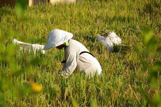 Biyukukung Suites and Spa: Schöner Blick auf die Reisfelder