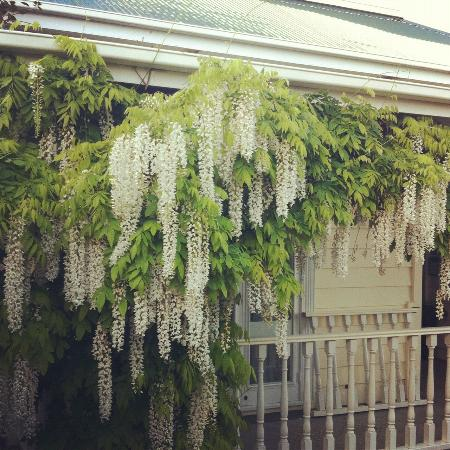 Great Ponsonby Arthotel : Beautiful front balcony at Great Ponsonby Art Hotel