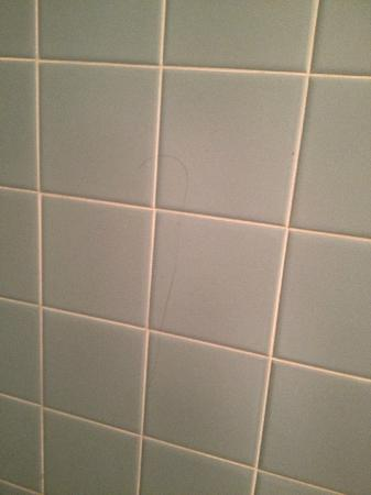 ‪إكونو لودج كورتلاند: gross hair on bathroom wall‬