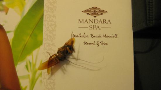 Waikoloa Beach Marriott Resort & Spa: One of the roaches