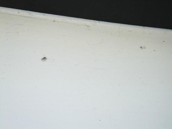 Hotel Indigo Newcastle: Flies next to the window