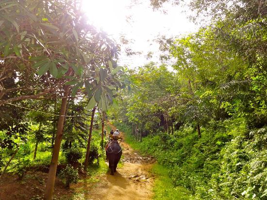 """Ко Чанг"" Сафари: Прогулки на слонах: Empezando el paseo"