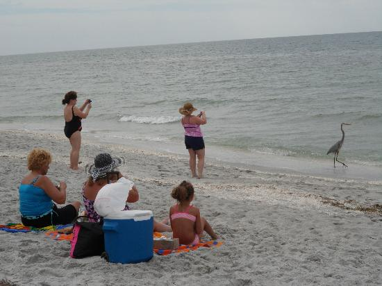 Fort Myers Beach: Wildlife lovers love it here