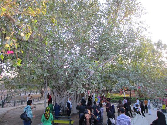 Green Tree Complex