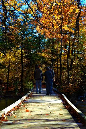 Dufferin Islands Park : A walk in a Enchanted Forest