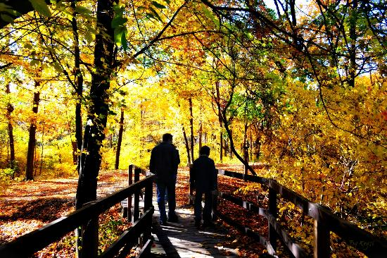 Dufferin Islands Park : Crossing the bridge to the Golden Forest