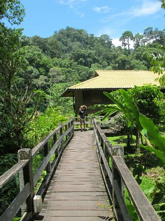 Danum Valley Conservation Area: the view from our lodge