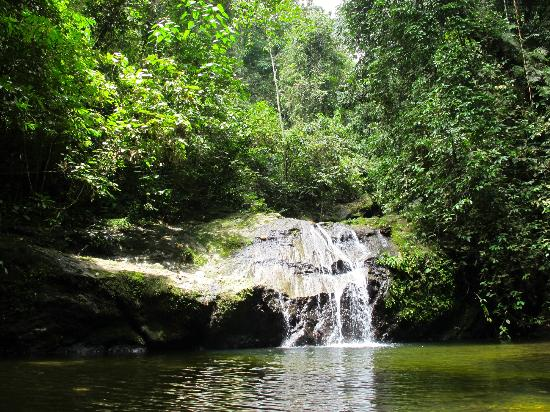 Danum Valley Conservation Area: the jacuzzi pool, nice place to swim