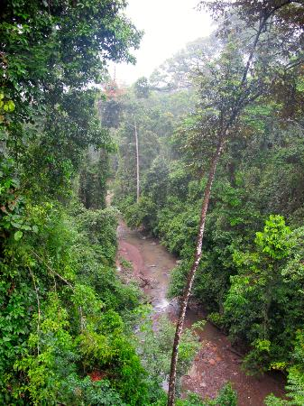 Danum Valley Conservation Area: wiev from the top of the trees