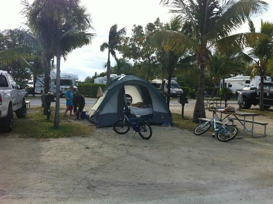 Boyd's Key West Campground: Tent area with electric - This is technically TWO sites back to back
