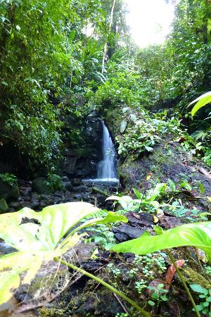 Finca Bavaria : Spaziergang zum Wasserfall