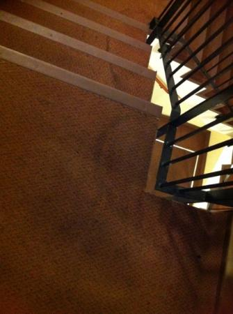 Edinburgh Playhouse Apartments: mystery stain