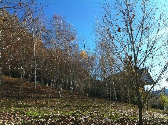 The Nth Birches through the Russian Birch trees on the estates ridge