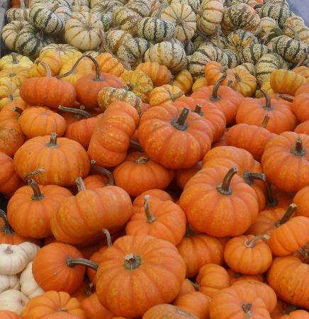 Wolff's Apple House: Pumpkins Galore