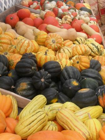 Wolff's Apple House: All Sorts of Squash