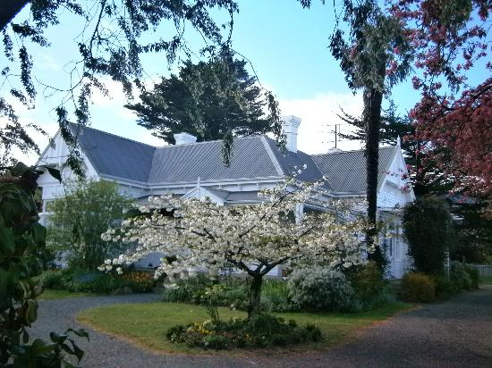 Huonville Guesthouse: flowering cherry trees