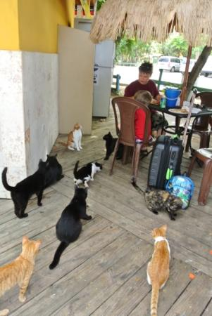 Flamenco Beach: lots of cats!