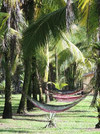 Turtle Beach Lodge: Se détendre