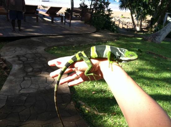 Matava - Fiji's Premier Eco Adventure Resort: Visitor wandered in, good thing he is friendly!
