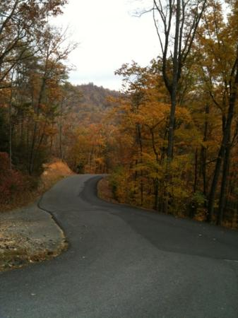 Berry Springs Lodge: The road that leads to the lodge.