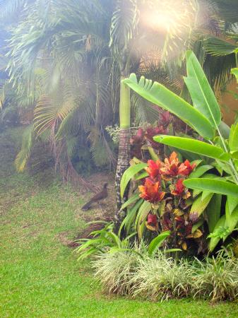 Arenal Manoa Hotel: Wild birds in our yard
