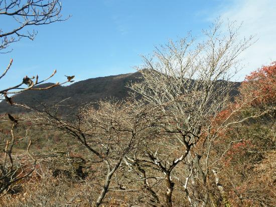 Mt. Kamiyama: 歩いている途中からの神山