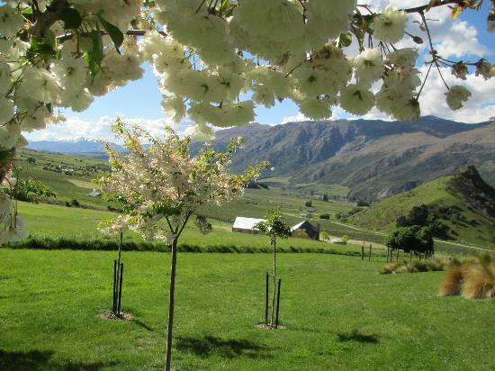 Mt Rosa Lodge: Looking out through the cherry trees