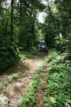 Rara Avis Rainforest Lodge & Reserve: The incredible road by tractor