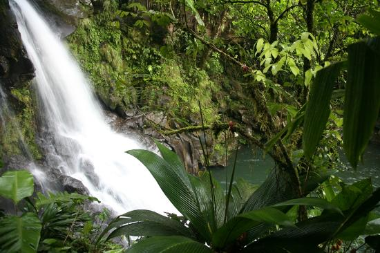 Rara Avis Rainforest Lodge & Reserve: One of the waterfalls