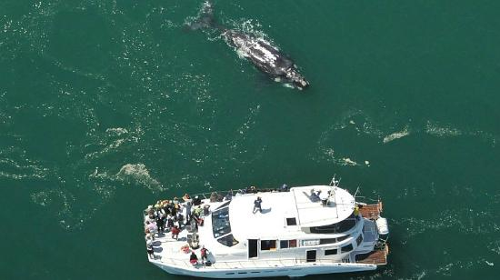 Hermanus-Seekers Day Tours: View of the whales from the boat.