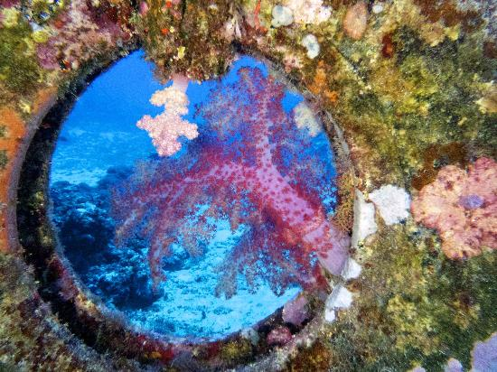 Tranquillity Island Resort & Dive Base : Beautiful soft coral framed in an old tyre on the Roimata
