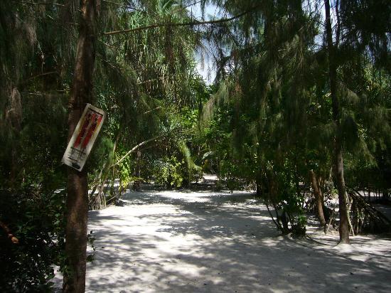 Bush Baby Bungalow: Paradisischer Garten